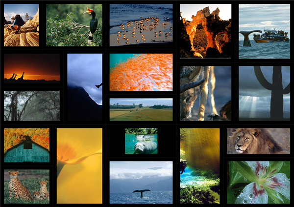 landscape collage template