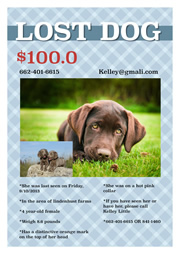 flyer templates for lost dog