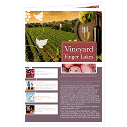 beautiful newsletter template of vineyard